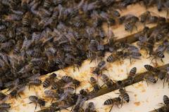 Zu kalt für Bienen und Blumen